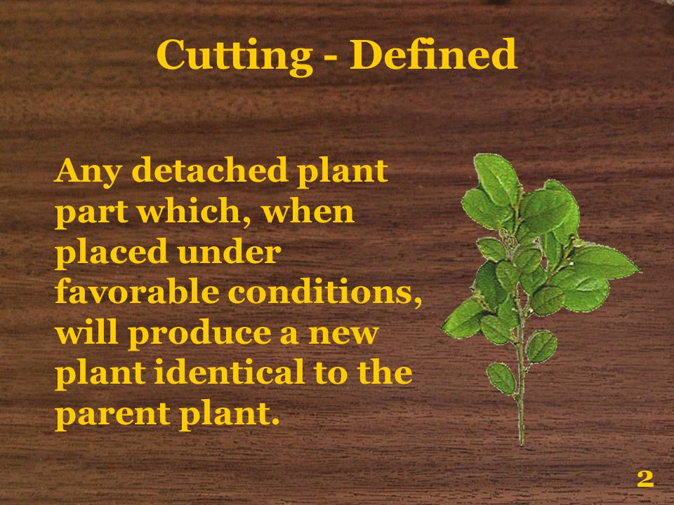 Cutting - Defined Any detached plant part which, when placed under favorable conditions, will produce a new plant identical to the parent plant.