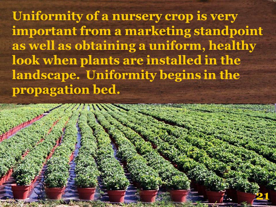 Uniformity of a nursery crop is very important from a marketing standpoint as well as obtaining a uniform, healthy look when plants are installed in the landscape. Uniformity begins in the propagation bed.
