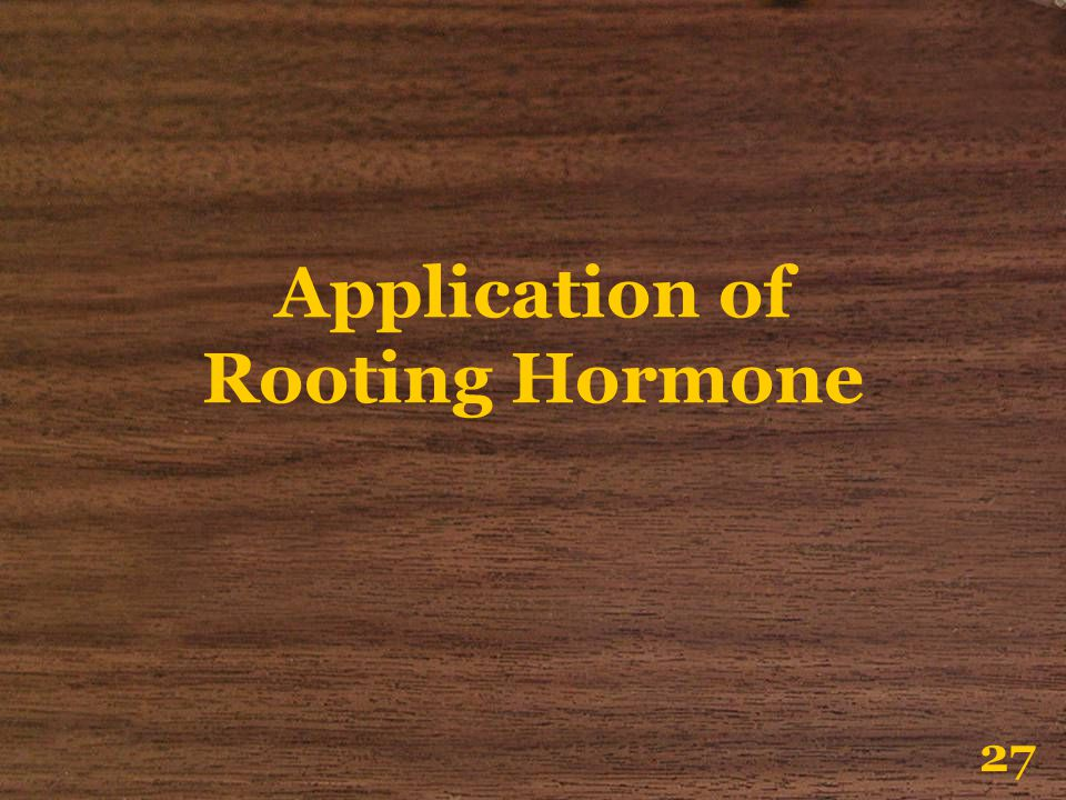 Application of Rooting Hormone