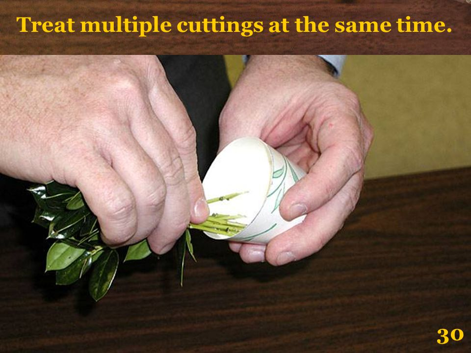 Treat multiple cuttings at the same time.