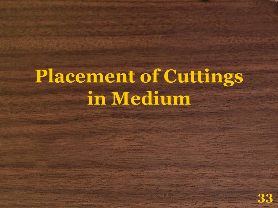 Placement of Cuttings in Medium