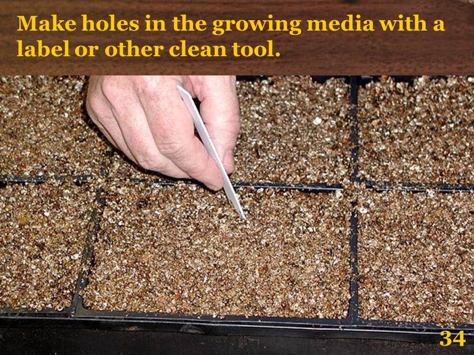 Make holes in the growing media with a label or other clean tool.