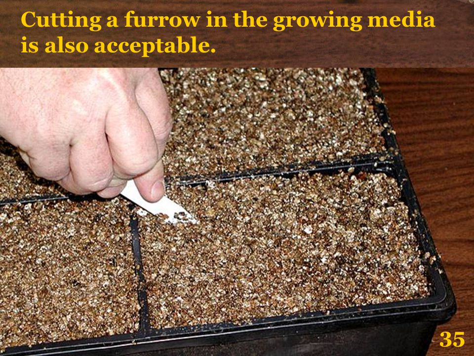 Cutting a furrow in the growing media is also acceptable.