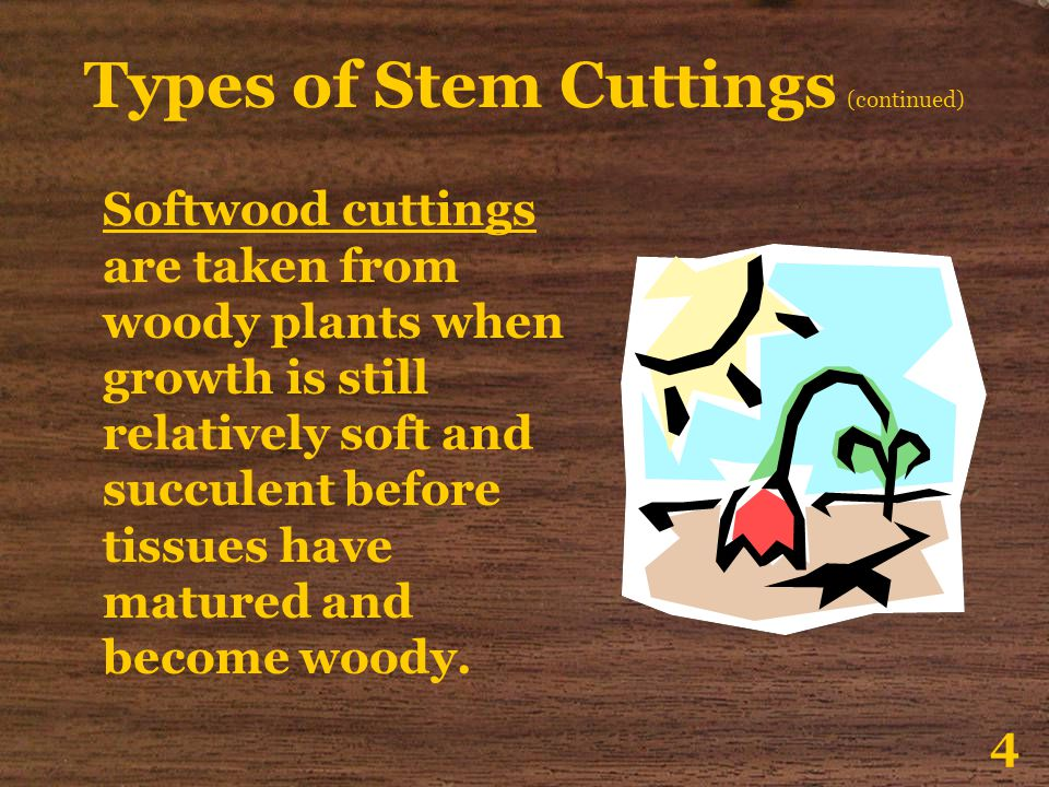 Types of Stem Cuttings (continued)