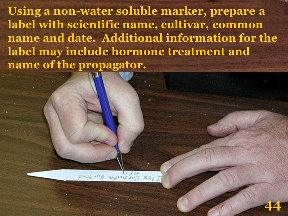 Using a non-water soluble marker, prepare a label with scientific name, cultivar, common name and date. Additional information for the label may include hormone treatment and name of the propagator.