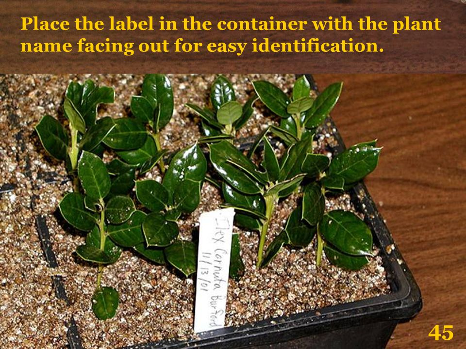 Place the label in the container with the plant name facing out for easy identification.