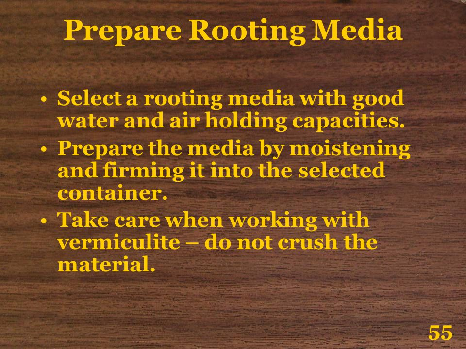 Prepare Rooting Media Select a rooting media with good water and air holding capacities.