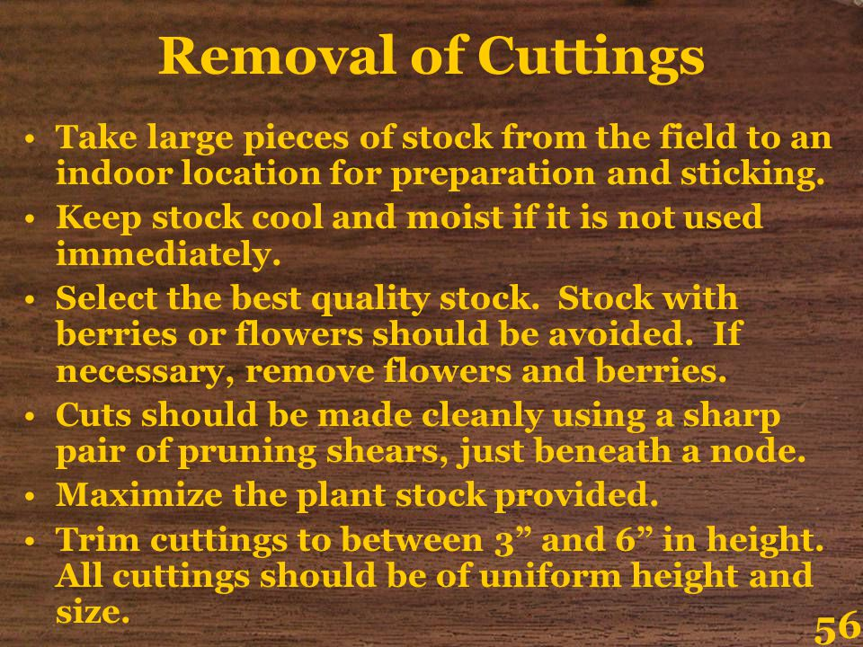 Removal of Cuttings Take large pieces of stock from the field to an indoor location for preparation and sticking.