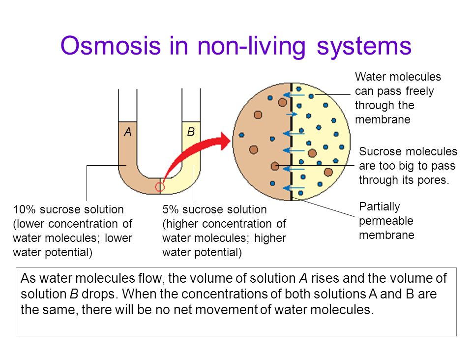 Osmosis in non-living systems