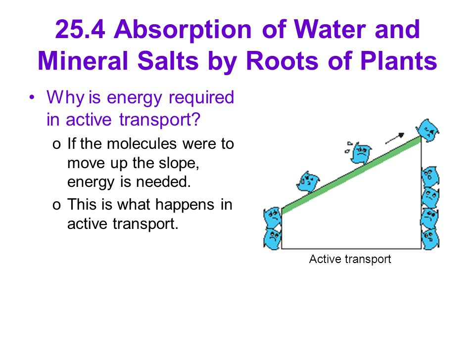 25.4 Absorption of Water and Mineral Salts by Roots of Plants