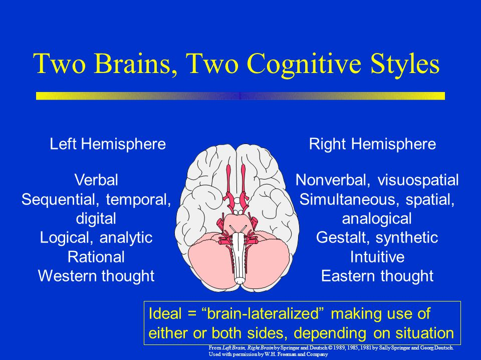 Two Brains, Two Cognitive Styles