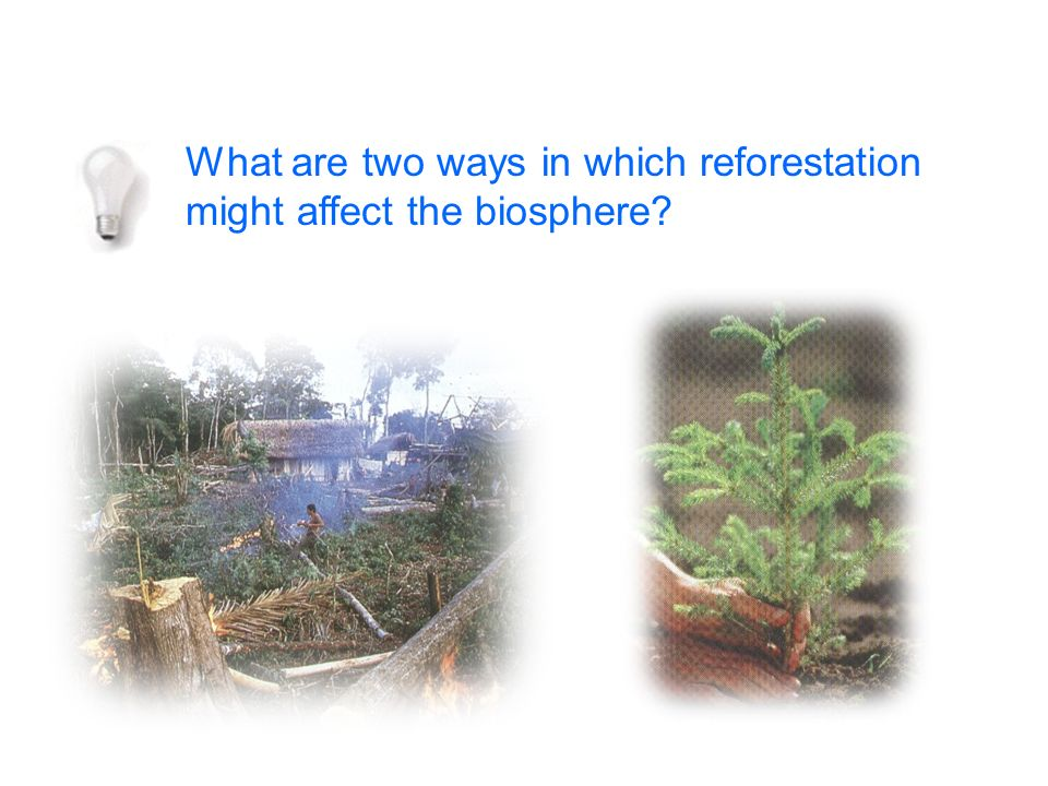 What are two ways in which reforestation might affect the biosphere