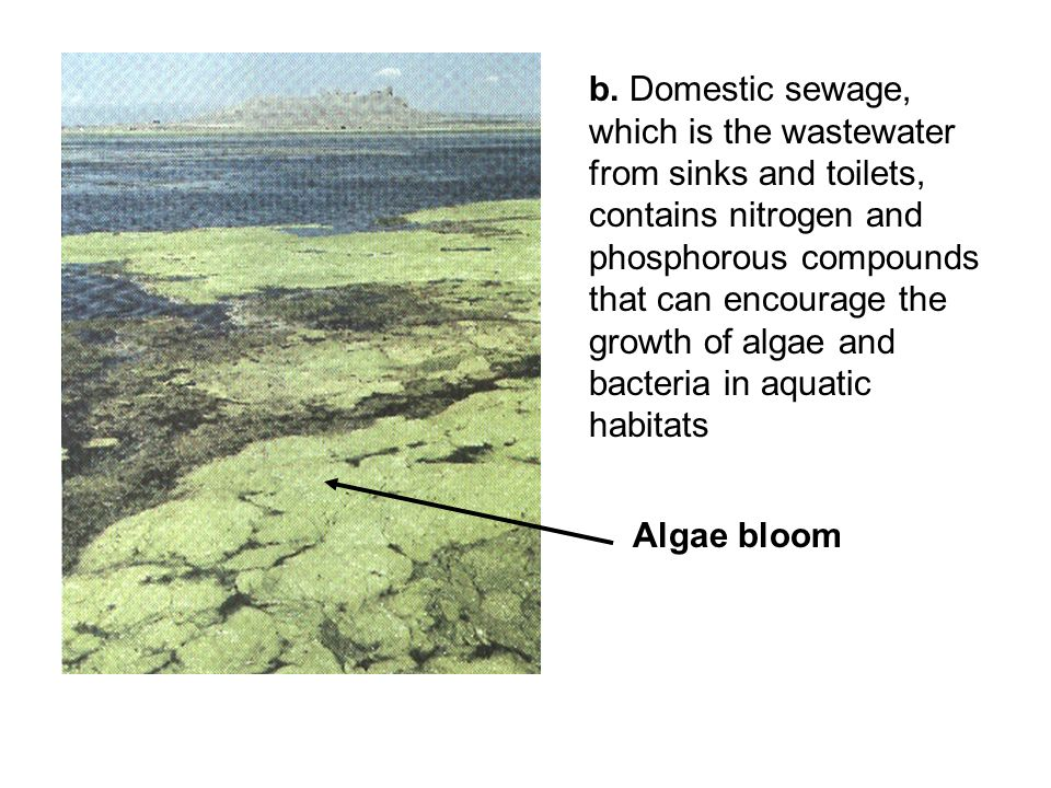 b. Domestic sewage, which is the wastewater from sinks and toilets, contains nitrogen and phosphorous compounds that can encourage the growth of algae and bacteria in aquatic habitats