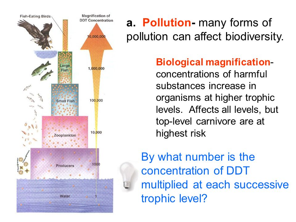 a. Pollution- many forms of pollution can affect biodiversity.
