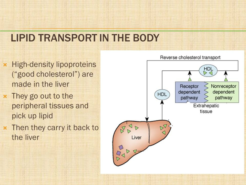 Lipid Transport in the Body