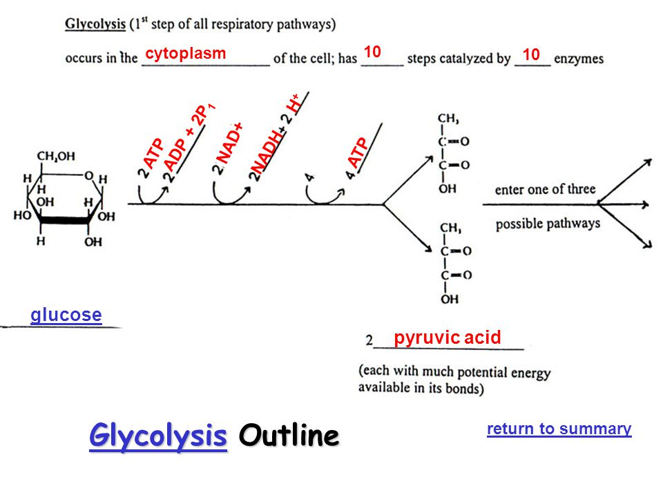 Glycolysis Outline glucose pyruvic acid cytoplasm 10 10 NADH H+