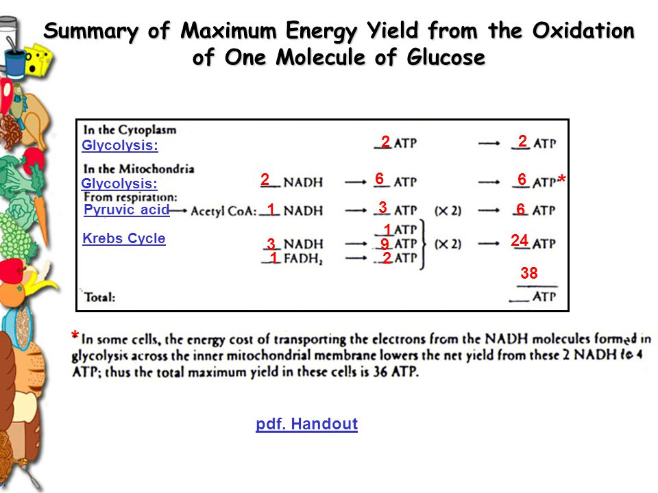 Summary of Maximum Energy Yield from the Oxidation of One Molecule of Glucose