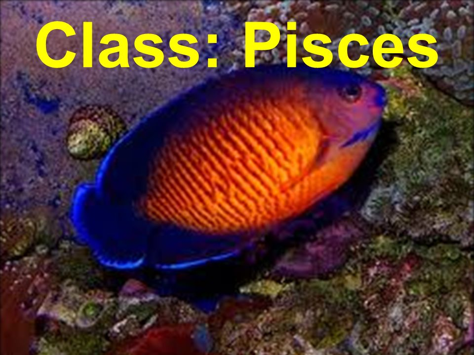 Class: Pisces
