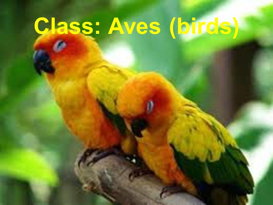 Class: Aves (birds)