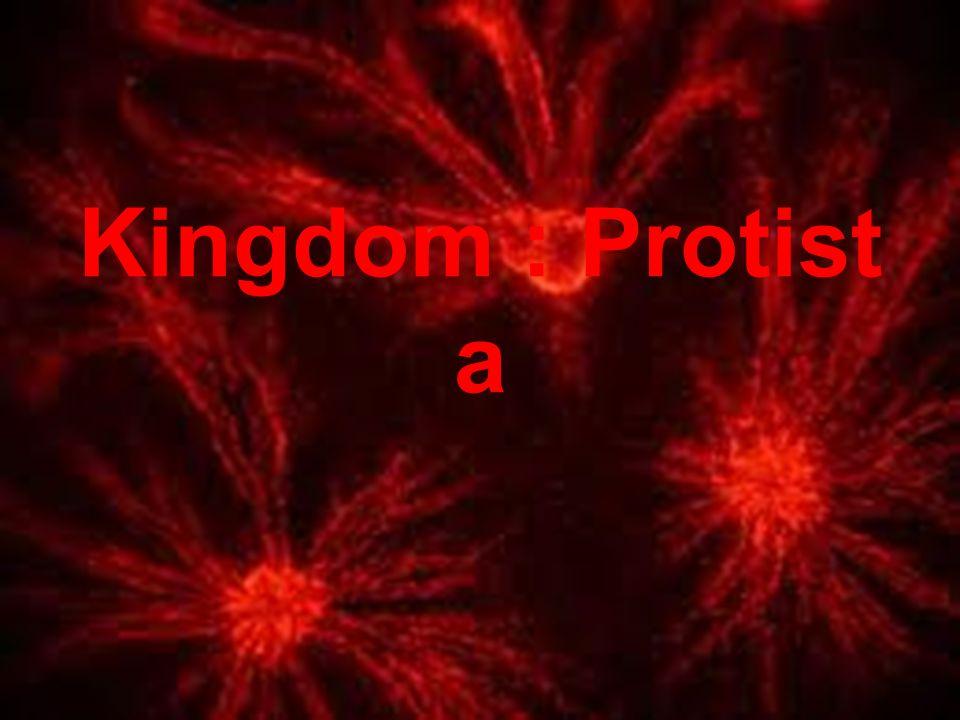 Kingdom : Protista