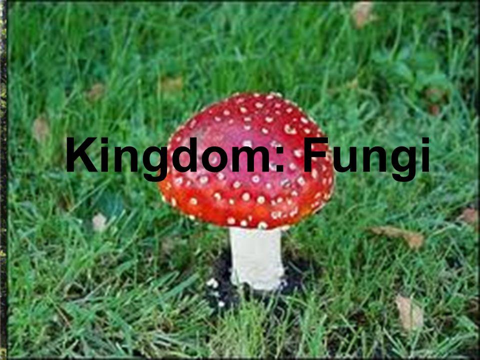 Kingdom: Fungi