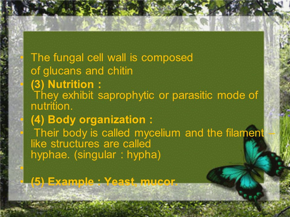 The fungal cell wall is composed of glucans and chitin