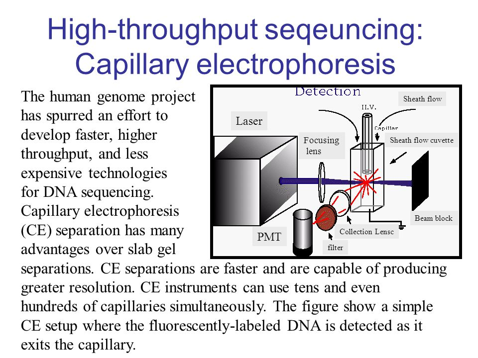 High-throughput seqeuncing: Capillary electrophoresis