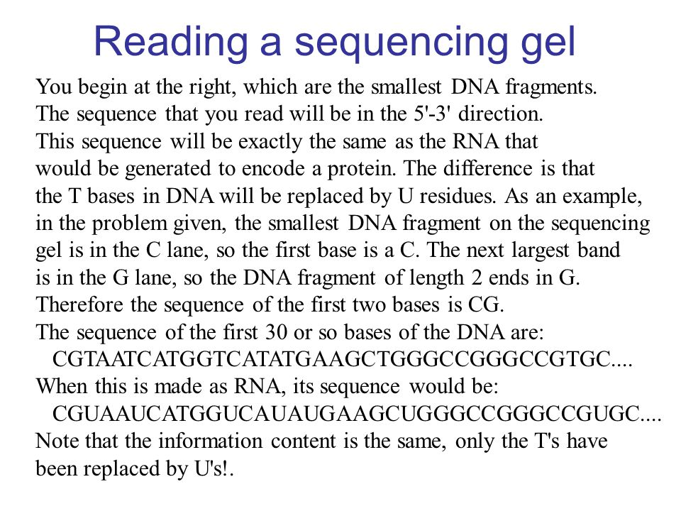 Reading a sequencing gel