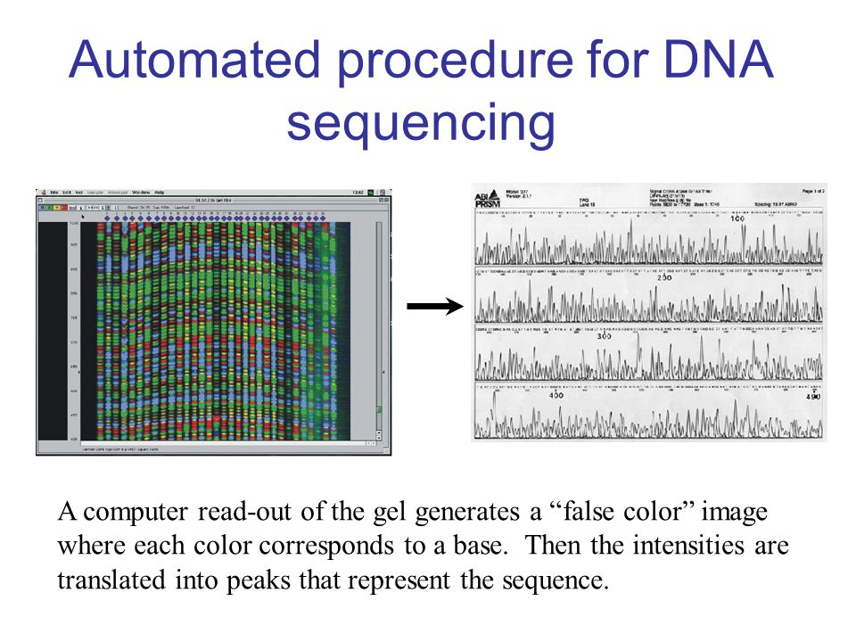 Automated procedure for DNA sequencing
