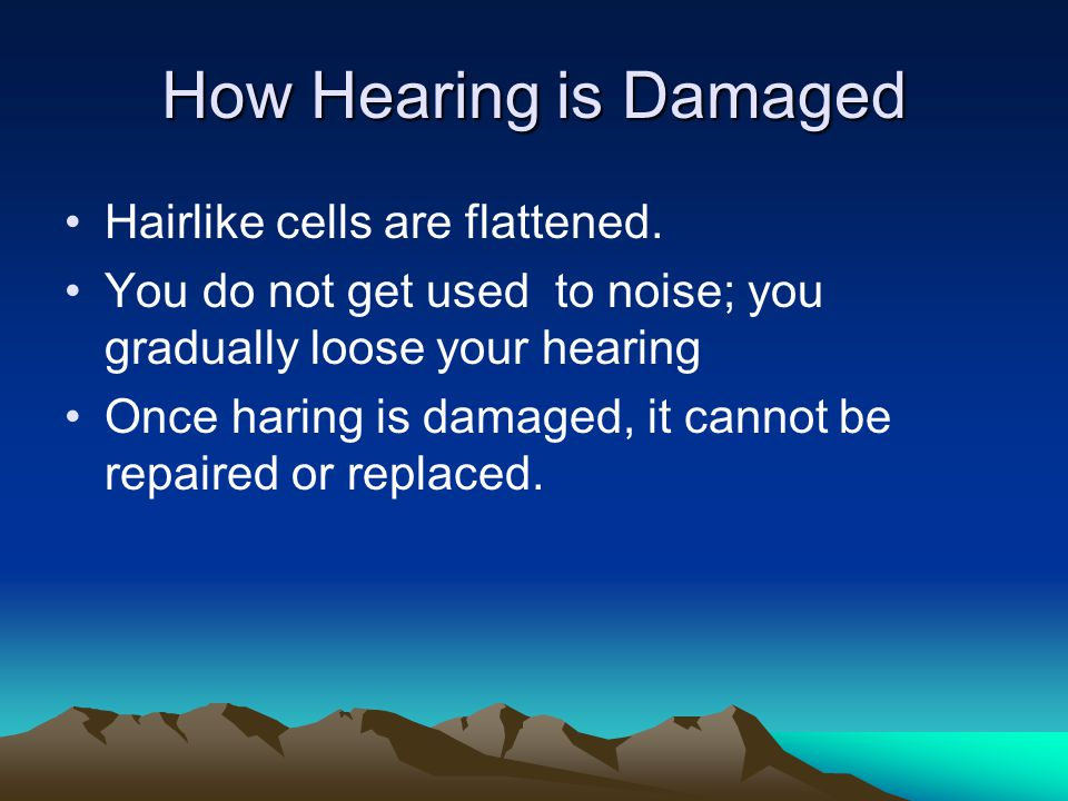 How Hearing is Damaged Hairlike cells are flattened.