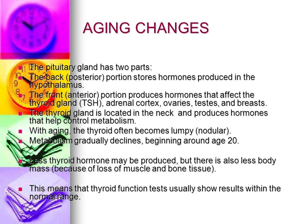 AGING CHANGES The pituitary gland has two parts: