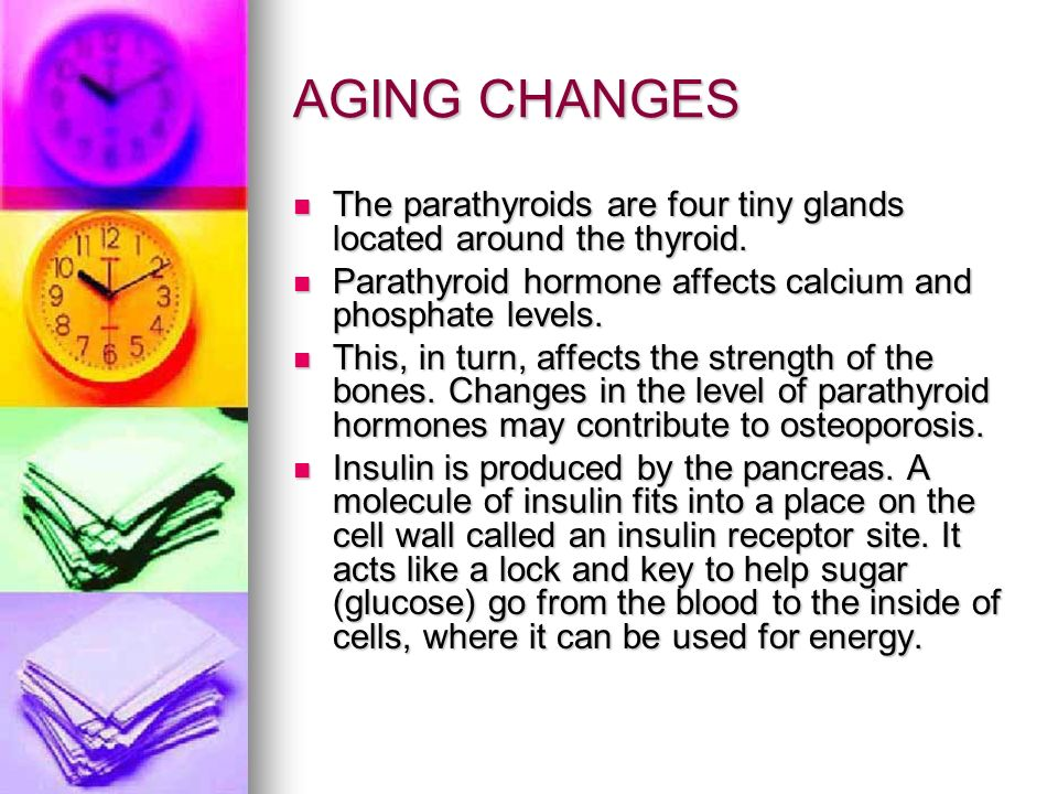 AGING CHANGES The parathyroids are four tiny glands located around the thyroid. Parathyroid hormone affects calcium and phosphate levels.