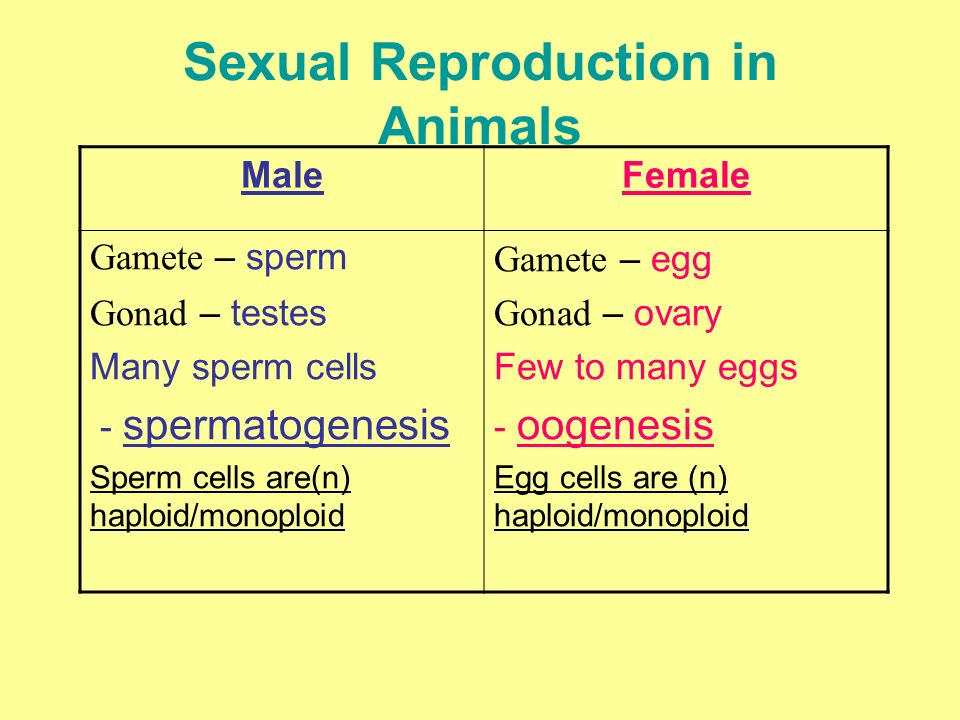 What happens to male and female gametes during sexual reproduction
