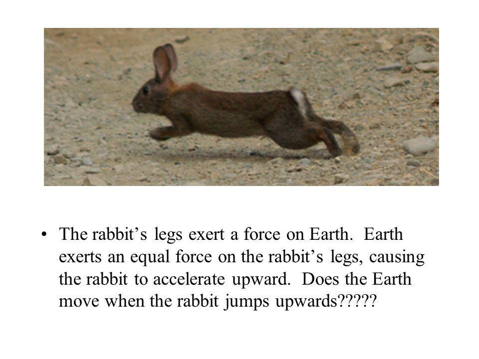 The rabbit's legs exert a force on Earth