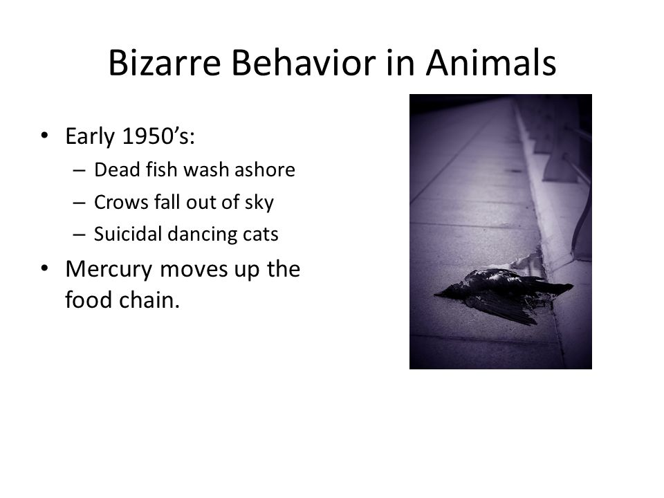 Bizarre Behavior in Animals