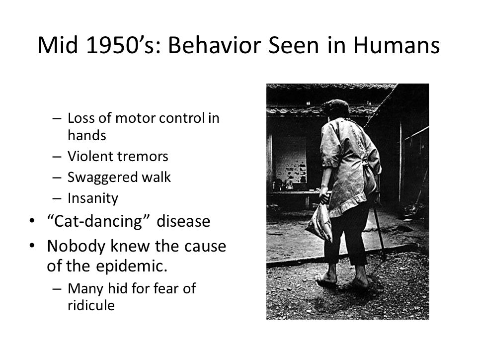 Mid 1950's: Behavior Seen in Humans