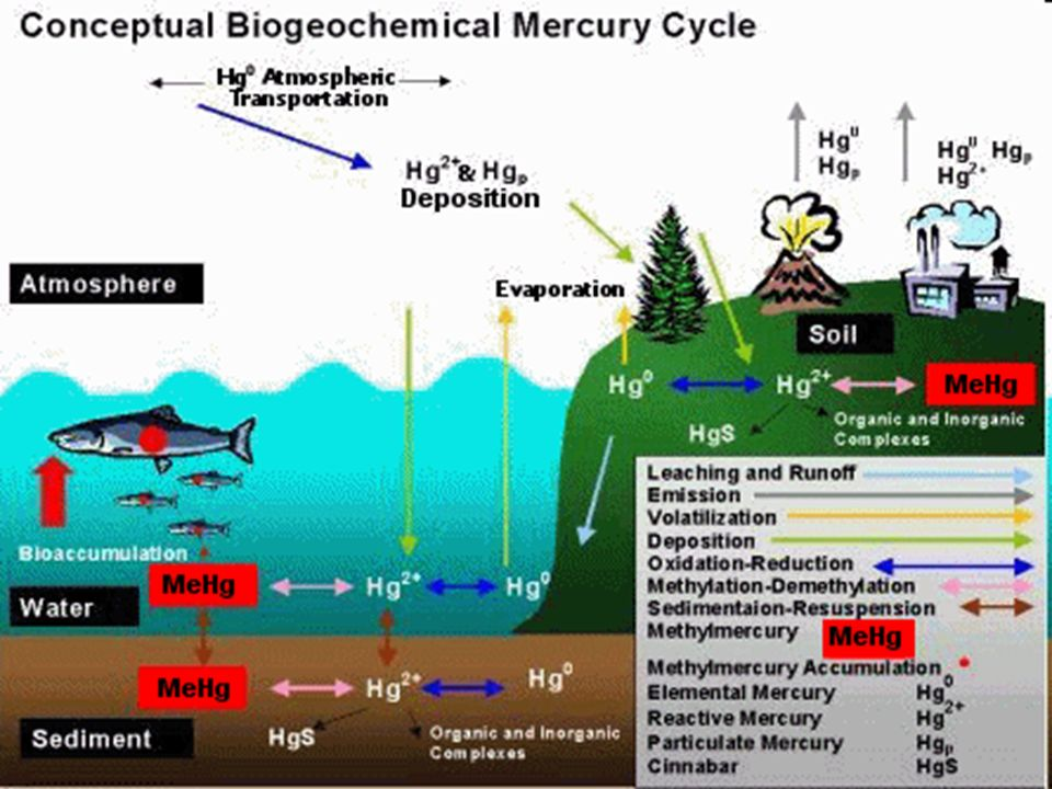 1. Mercury is emitted to the atmosphere as a gas or as particulate matter. Degassing of mercury from rock, soils, and surface waters,