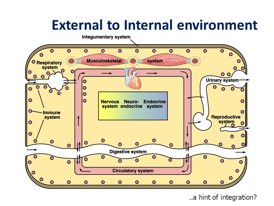 External to Internal environment