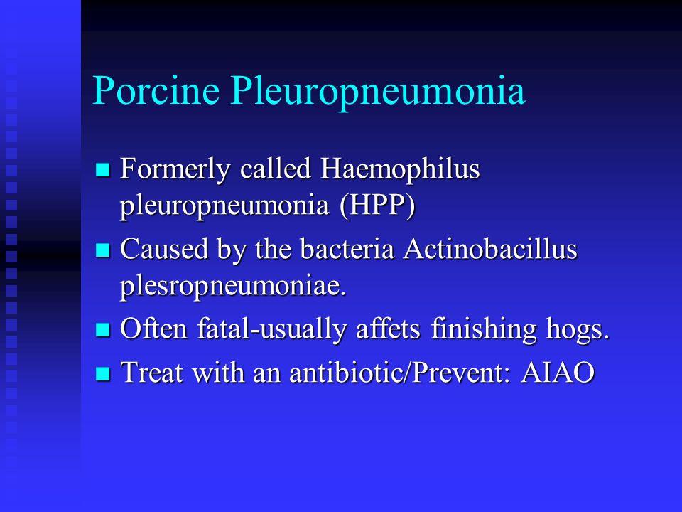 Porcine Pleuropneumonia
