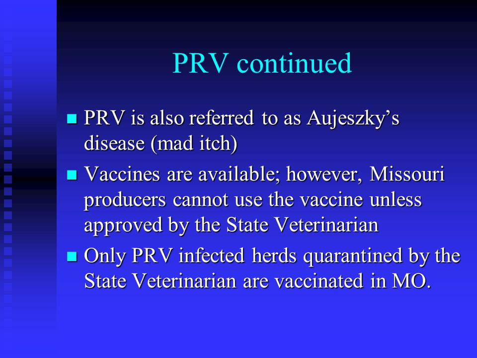 PRV continued PRV is also referred to as Aujeszky's disease (mad itch)