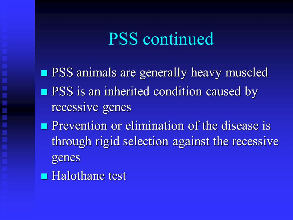 PSS continued PSS animals are generally heavy muscled