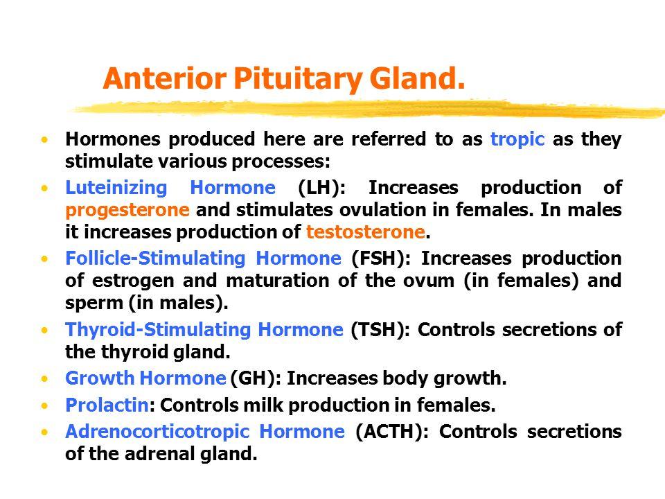 Anterior Pituitary Gland.