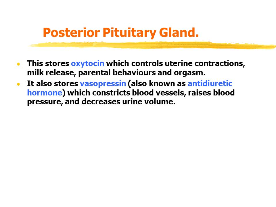 Posterior Pituitary Gland.