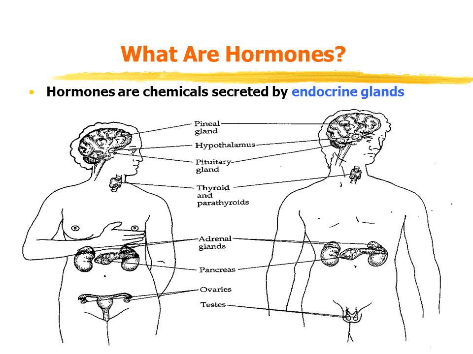 biological bases of behaviour. lecture 6: hormones. - ppt download, Human Body