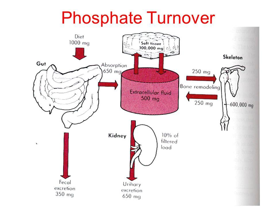 Phosphate Turnover