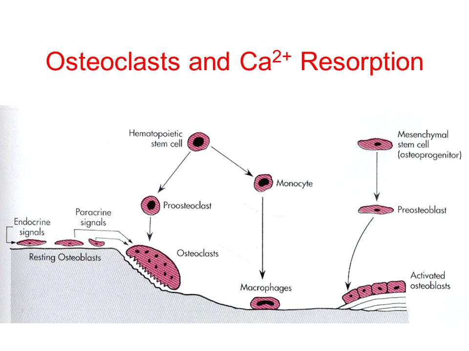 Osteoclasts and Ca2+ Resorption