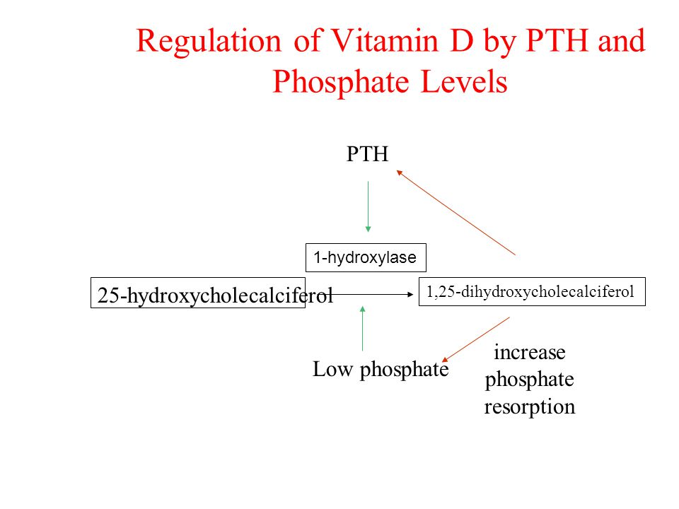 Regulation of Vitamin D by PTH and Phosphate Levels