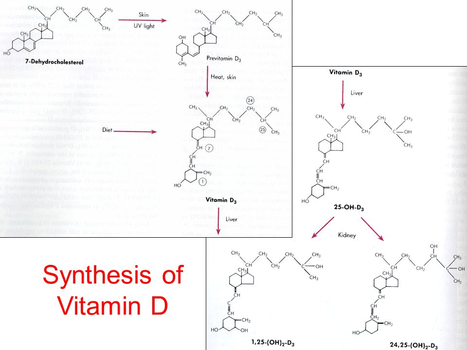 Synthesis of Vitamin D