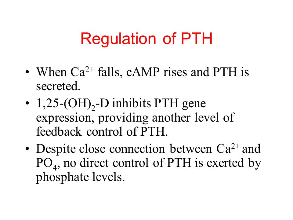 Regulation of PTH When Ca2+ falls, cAMP rises and PTH is secreted.