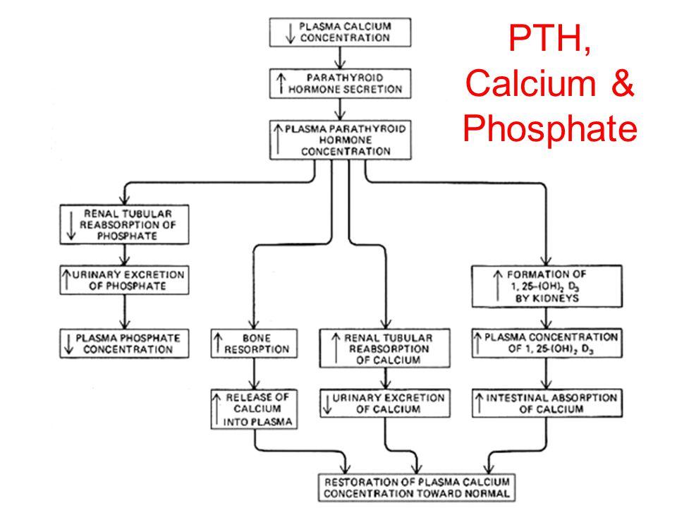 PTH, Calcium & Phosphate